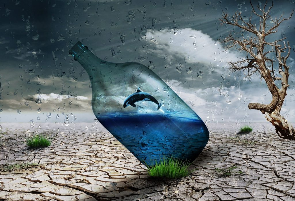 desert, bottle, dolphin